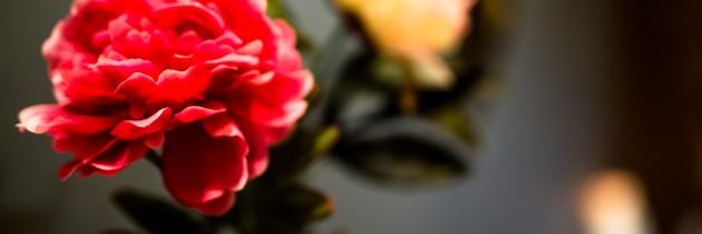 Salud y belleza en CANTABRIA. CENTRO VELVET