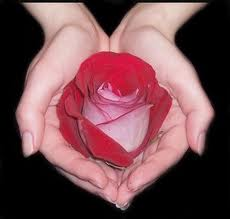 mano y rosa
